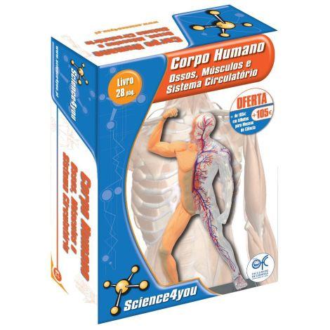 Corpo Humano - Ossos, Músculos e Sistema Circulatório